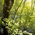 筑波山 緑の中で