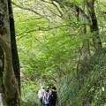 写真: 筑波山 緑の中を