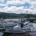 写真: 網代漁港