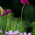 写真: 花から花へ 2