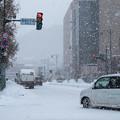 写真: 雪しんしん