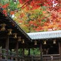 写真: 秋之迴廊
