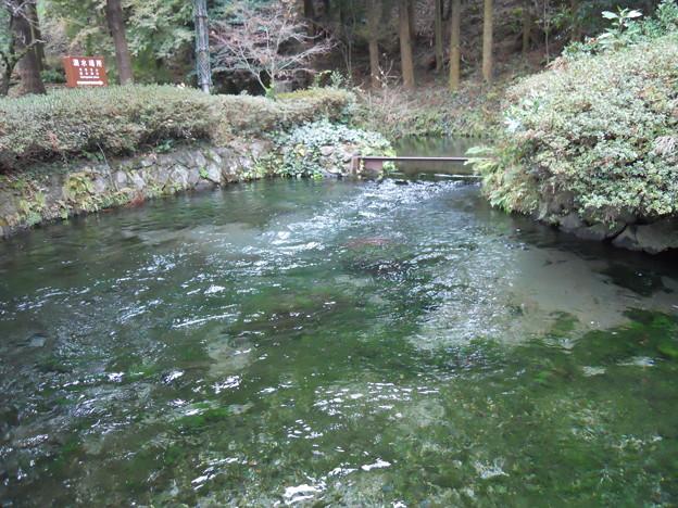 九州 白川水源