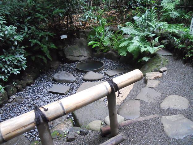 明治神宮 御苑 清正の井戸