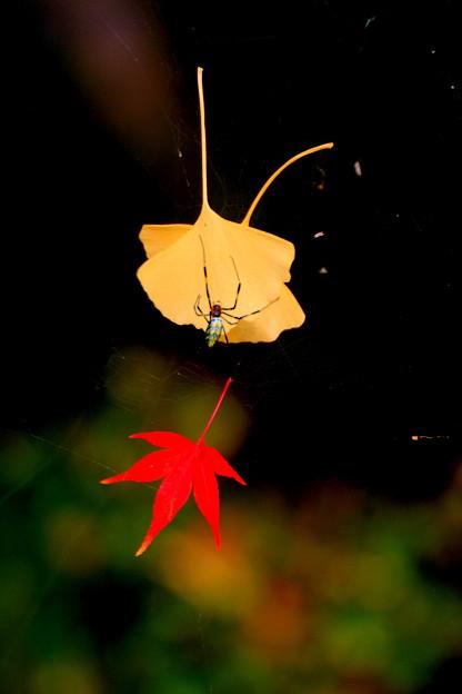 秋を抱きしめて