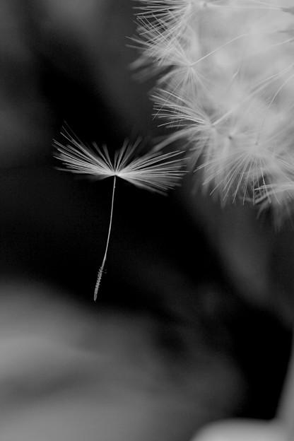 写真: 風旅