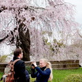 写真: 古都の春