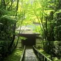 写真: 緑の深呼吸