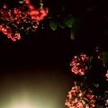 Photos: 夏の夜