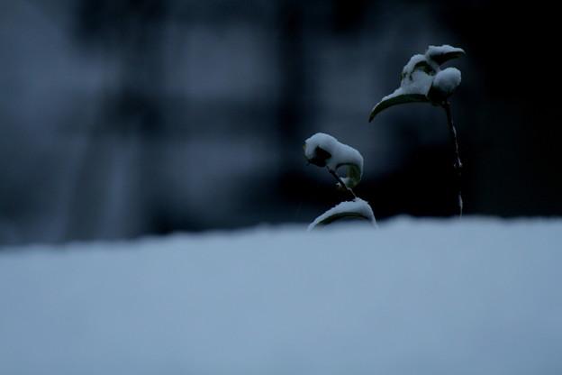写真: 冬が始まるよ~♪