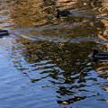 写真: 金の波紋