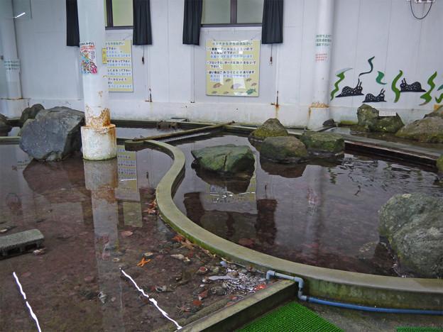 なぎさ水族館(4)