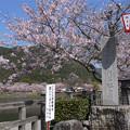 錦帯橋@2017(2)桜