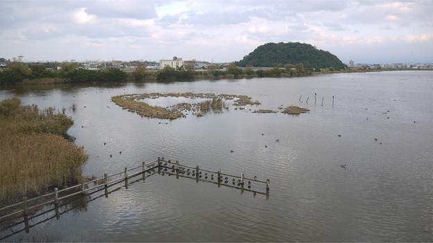 米子水鳥公園(3)