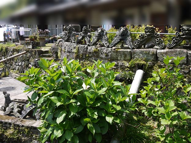 椿堂・椿大堂・椿光寺 への道のり(2)