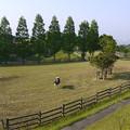 Photos: 油山牧場@2014 (3)