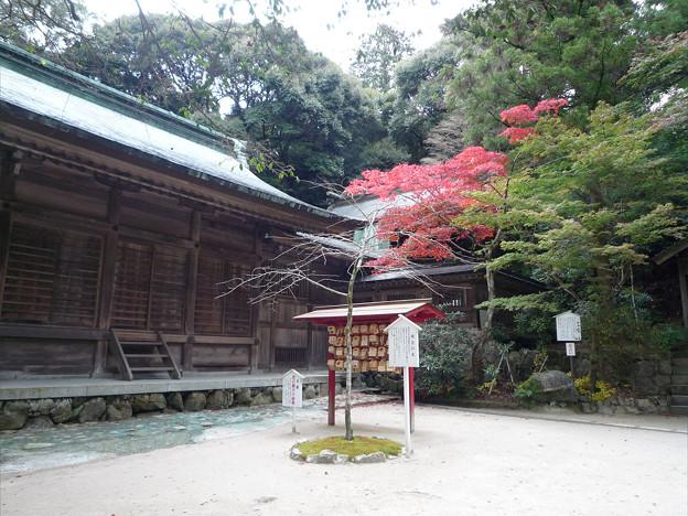竈門神社~再会の木