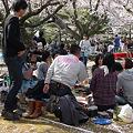 舞鶴公園の桜(17)