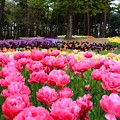 写真: 花團錦簇