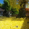 写真: 黄金の境内