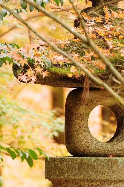 写真: 去りゆく秋