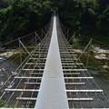 写真: 興津川つり橋