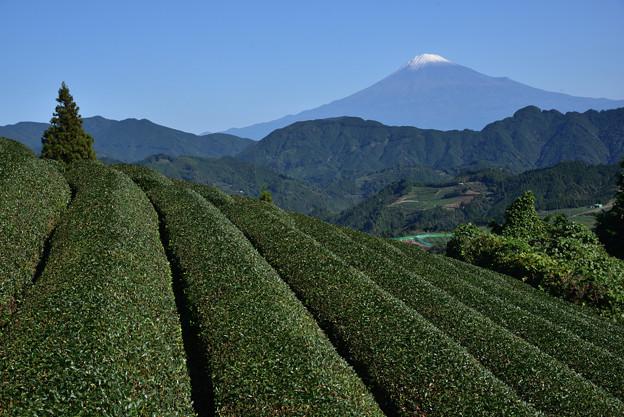 今日の富士山(冠雪)
