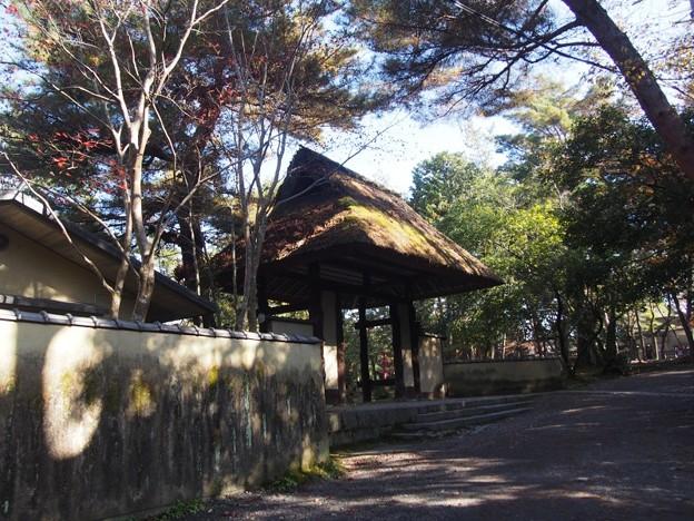 uenojousi_iga35
