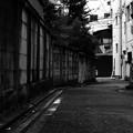 Photos: モノクロームの裏路地