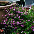 写真: 小さな庭園