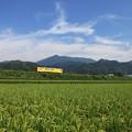 Photos: 青天