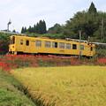 写真: 黄色と赤