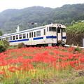写真: 赤いジュウタンと列車