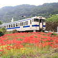 Photos: 赤いジュウタンと列車