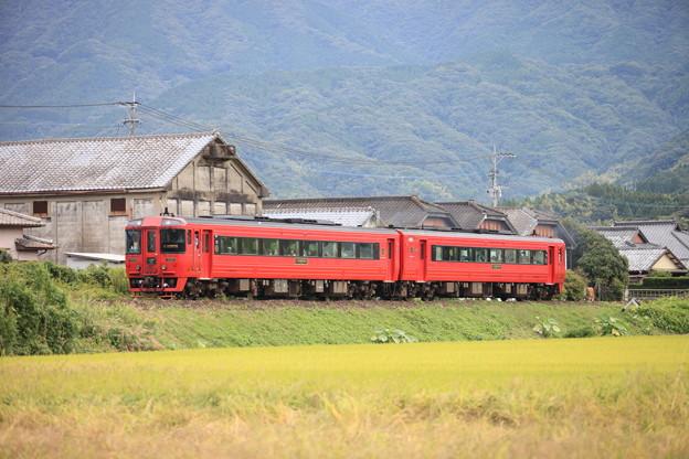 稲穂と特急列車