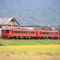Photos: 稲穂と特急列車