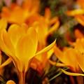 Photos: 春燃ゆ