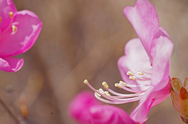 春が来た~~♪