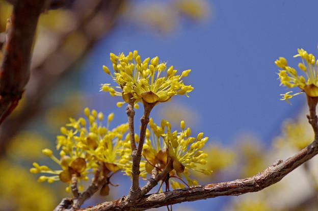 春が来た (2)
