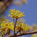 Photos: 春が来た (2)