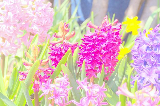 春が来た~♪