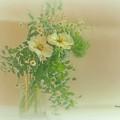 写真: 緑恋しき