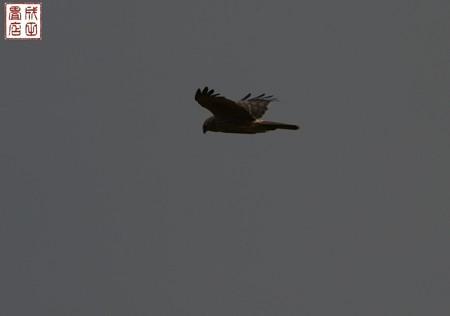 ハイチュウメス01
