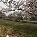 写真: oomuro08