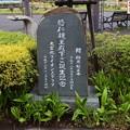 写真: 大宮花の丘公園02