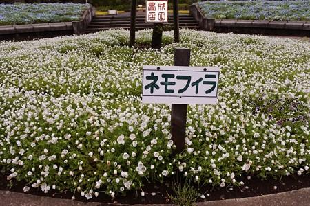 大宮花の丘公園06