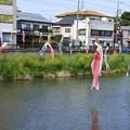 写真: 鯉のぼり01
