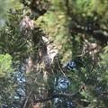 フクロウ13