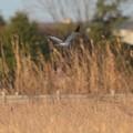 写真: ハイチュウ11