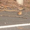 写真: 小鳥01